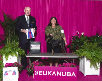Best Veteran Eukanuba