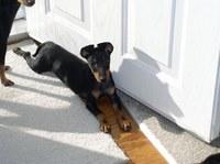 Sun Dog Rosie