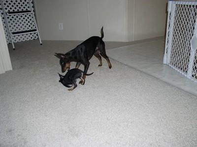 dogPup1