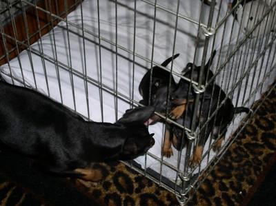 dogsPups3