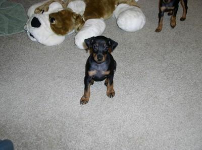 Pups5